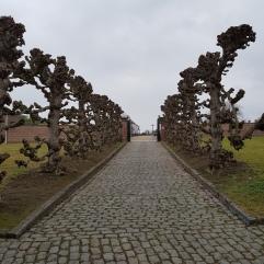 Cementerio / Cemetery